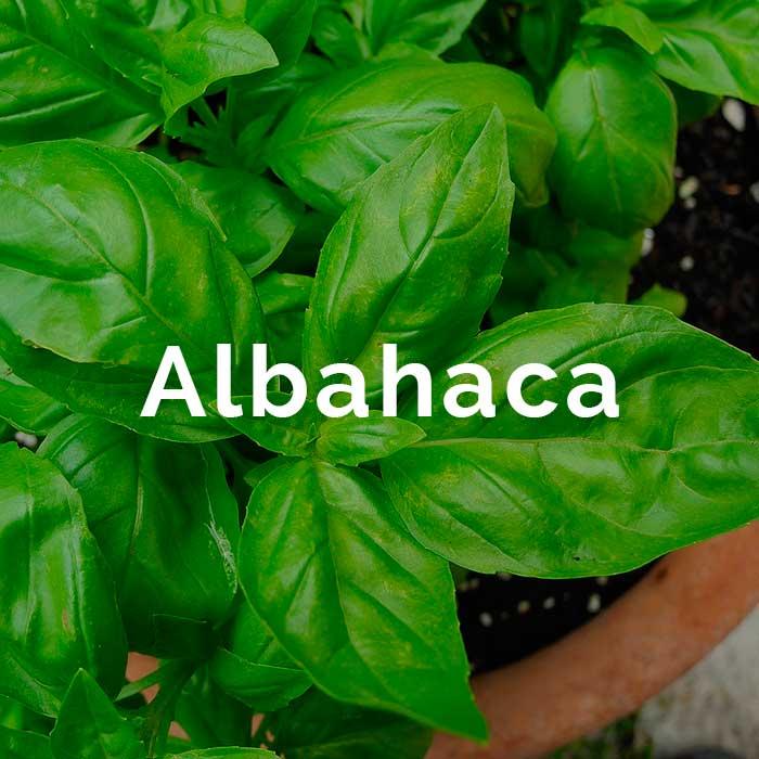 propiedades beneficios aceite albahaca