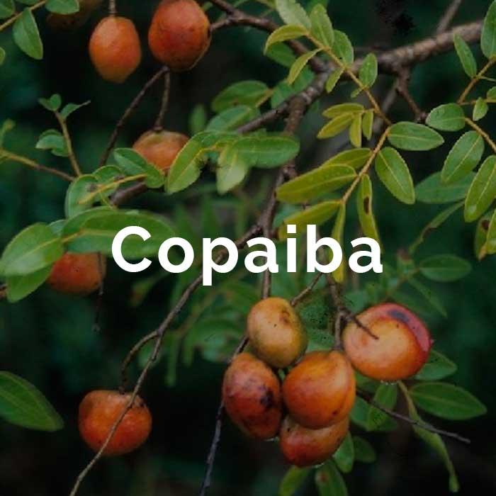 propiedades beneficios aceite copaiba