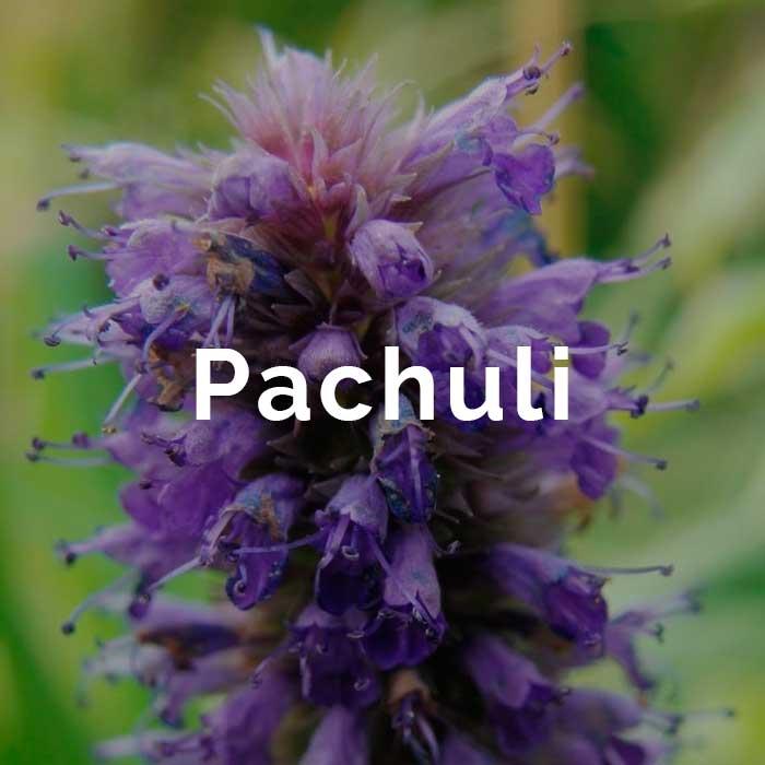 propiedades beneficios aceite esencial pachuli