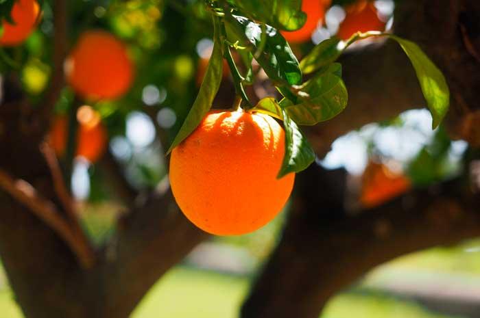 usos del aceite de naranja